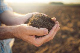 regeneracja gleby